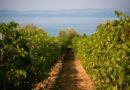 Il Lago di Garda tra le 10 destinazioni vinicole top al mondo del 2019 secondo Wine Enthusiast